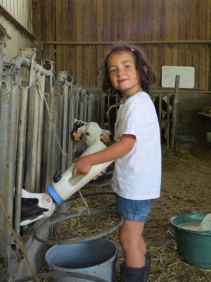 Enfant qui nourri un veau
