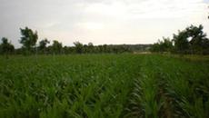 Agroforesterie - faisabilité