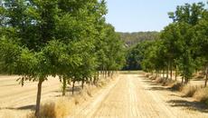 Agroforesterie - Parcelles - Intéractions