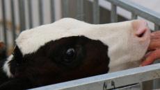 Formation Normandie : Soigner mes bovins par l'homéopathie - Initiation