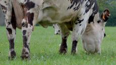 Alimentation - Fourrages pour bovin lait